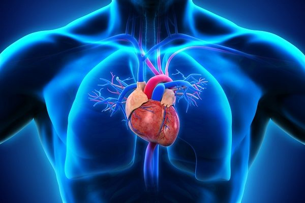 Cardiopulmonary Services
