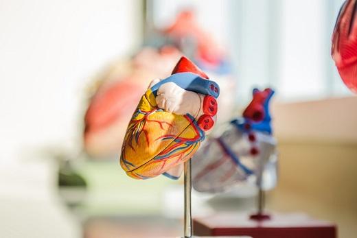 Heart Health & Heart Month 2020 (February)